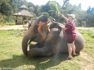 Thailand Elephant Adventure
